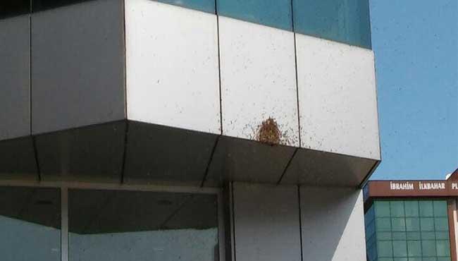 Bankayı arılar bastı...  İşte o görüntüler...