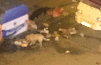 Çöpler duruyor köpekler iş başında!