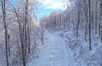 Kent Ormanı'nda kar güzelliği