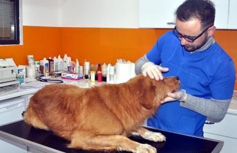 Çenesi kırılan sokak köpeği tedavi altına alındı...