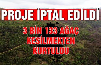 Proje iptal edildi... 3 bin 133 ağaç kesilmekten kurtuldu...