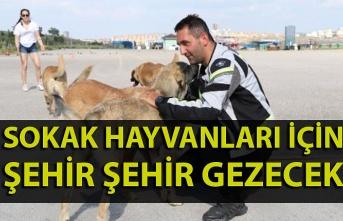 Sokak hayvanları için şehir şehir gezecek