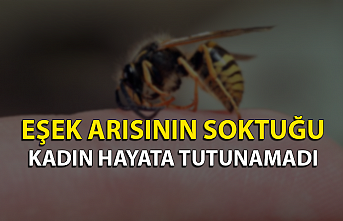 Eşek arısının soktuğu kadın hayata tutunamadı...