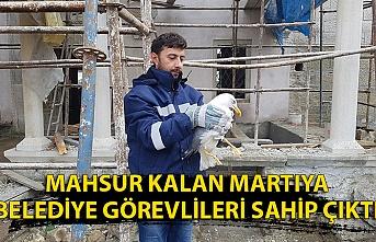 Mahsur kalan martıya belediye görevlileri sahip çıktı