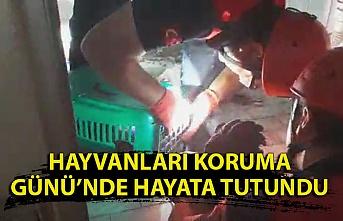 Kdz. Ereğli İtfaiyesi'nden kedi kurtarma operasyonu