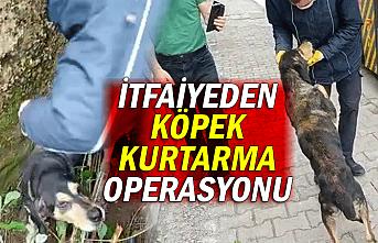 İtfaiyeden köpek kurtarma operasyonu