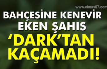 Bahçesine kenevir eken şahıs 'Dark'tan kaçamadı