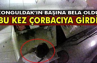 Zonguldak'ın başına bela oldu. Bu kez çorbacıya girdi