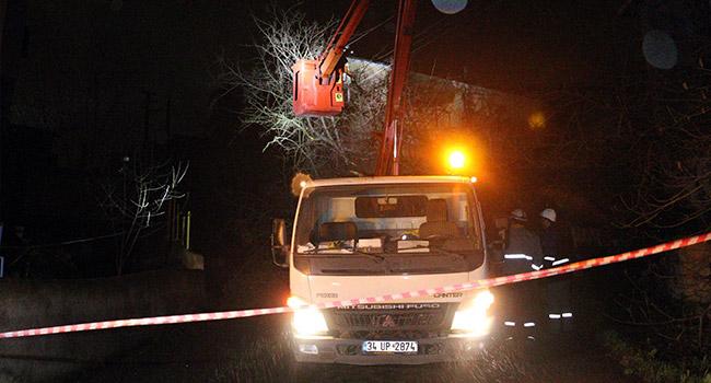 Dut ağacı mahalleyi elektriksiz bıraktı...