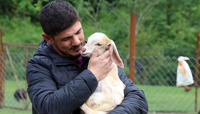 Ali Başkan'ın oğlunun keçi sevgisi... Evladı gibi bakıyor