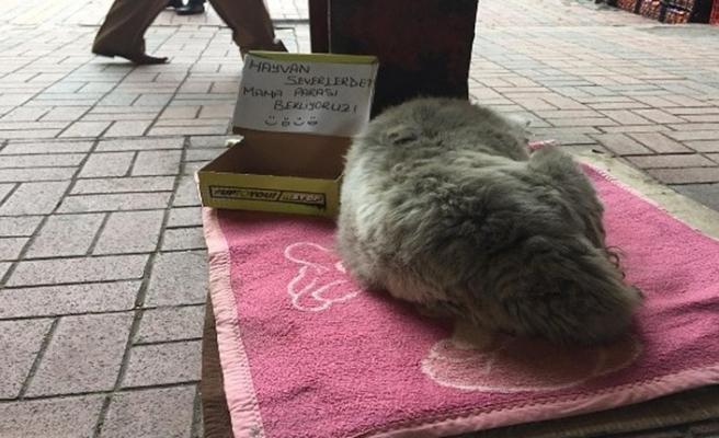 Sokak hayvanları için karton kutudan kumbara