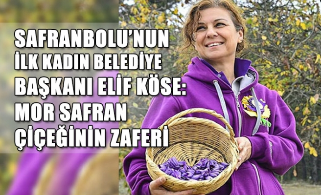 Safranbolu'nun ilk kadın Belediye Başkanı Elif Köse: Mor safran çiçeğinin zaferi