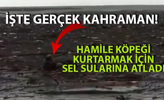 Akçakoca'da bir adam sel sularından hamile köpeği kurtardı