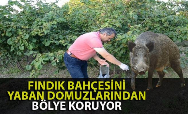 Zonguldak'ta bir köylü tarlasını domuzlardan böyle koruyor
