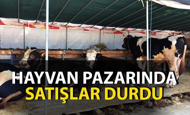 Hayvan pazarında satışlar durdu! Tatil üreticilere sekte vurdu!