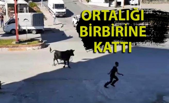 Zonguldak'ta kaçan kurbanlık boğa ortalığı birbirine kattı