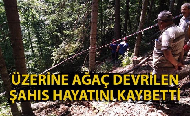 Üzerine ağaç devrildi, hayatını kaybetti
