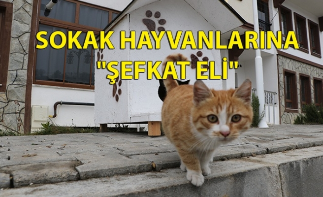 "SOKAK HAYVANLARINA ""ŞEFKAT ELİ"""
