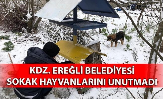 Kdz. Ereğli Belediyesi sokak hayvanlarını unutmadı