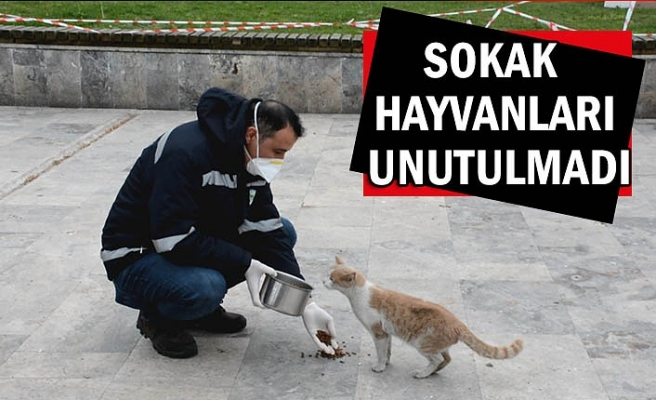 Sokak hayvanlarını unutulmadı