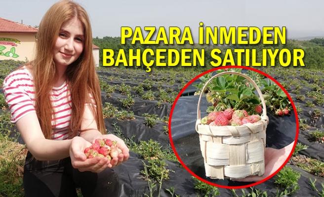 Osmanlı çileği ilk ürününü verdi