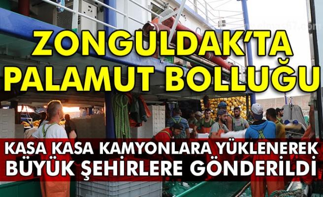 Zonguldak'ta palamut bolluğu Kasa kasa kamyonlara yüklenerek büyük şehirlere gönderildi