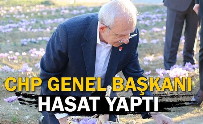 CHP Genel Başkanı hasat yaptı