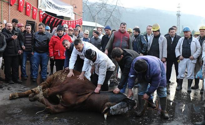 Maden işçisinin kalbi Afrin'de atıyor...