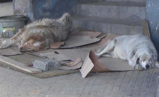 Sokak hayvanları için neler yapılabilir...