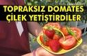 Topraksız domates çilek yetiştirdiler.
