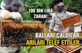 Balları çaldılar... Arıları telef ettiler... 100 bin lira zarar!
