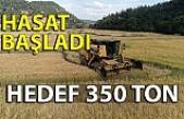 Hasat başladı… Hedef 350 ton