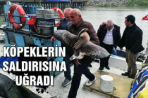 Köpeklerin saldırısına uğradı... Balıkçılar kurtardı...