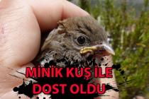 Yuvadan düşen yavru kuşla arkadaş oldu