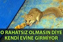 Zonguldak'ta ilgin olay: Ağaç yediuyurunun rahatsız olmaması için eve girmiyor