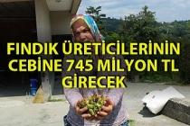 21 bin fındık üreticisinin 745 milyon TL  kazanması hesaplanıyor