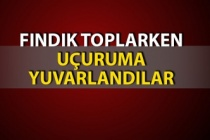 Zonguldak'ta tarlada fındık toplarken uçuruma yuvarlandılar