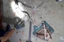 Yılan yakalama operasyonu