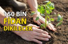 150 Bin Fidan Dikilecek
