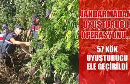 Jandarmadan uyuşturucu operasyonu... 57 kök uyuşturucu...