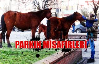 Parkın misafirleri...