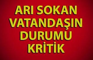 Zonguldak'ta arının soktuğu vatandaşın durumu...