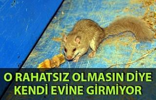 Zonguldak'ta ilgin olay: Ağaç yediuyurunun...