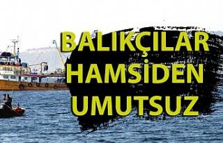Balıkçılar sezona umutsuz başladı. Hamsi ve Palamut...