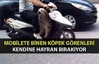 Mobilete binen köpek görenleri kendine hayran bırakıyor
