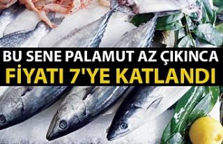 Balıkçılar bu sene palamuttan umutsuz