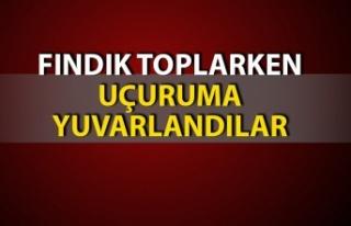Zonguldak'ta tarlada fındık toplarken uçuruma...