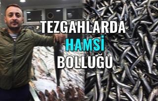 TEZGAHLARDA HAMSİ BOLLUĞU