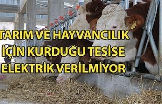 Tarım ve hayvancılık için kurduğu tesise elektrik...