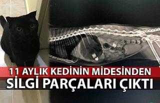 11 aylık kedinin midesinden silgi parçaları çıktı